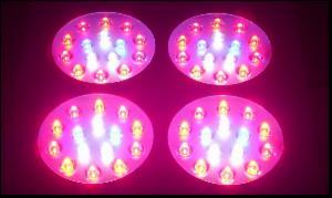 _wsb_300x179_LED-Pflanzenlampe_Grow_Betrieb_60x3w